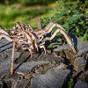 Ewa Eco Wood Art Spider Ragno Meccanico Tridimensionale Puzzle Per Adulti E Adolescenti Collezione Senza Colla 293 Dettagli Colore Natura 0 2